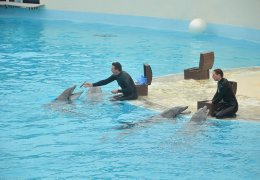 Dauphins Exercice 2