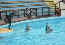 Dauphins Exercice